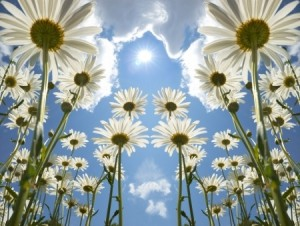 Summer Solstice Ritual and Sound Healing @ The Theosophical Society Center for Spiritual Studies