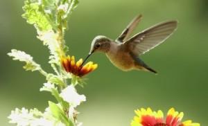 + hummingbird 16999850_s