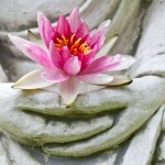 The Bully or the Buddha: What Is the Essence of Power?