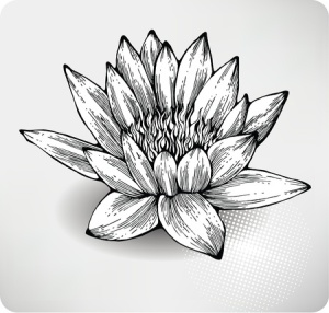+ lotus black and white Greyscale Sept 09 11651078_s