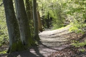 + tree-lined path FB AP 16 19986092_s